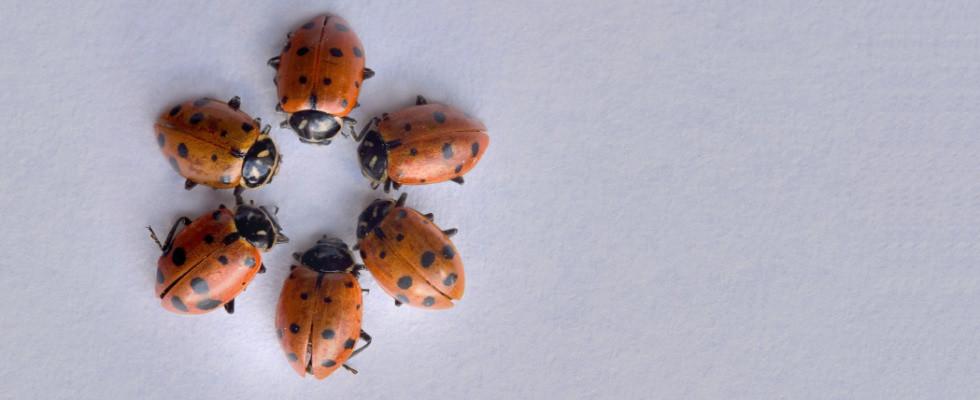 Ladybug-Circle-Static4-980x400