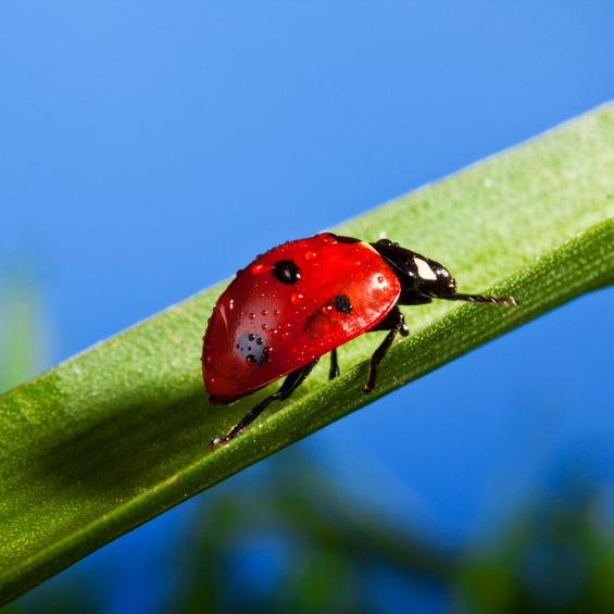 Ladybug-Grass-Static06-best